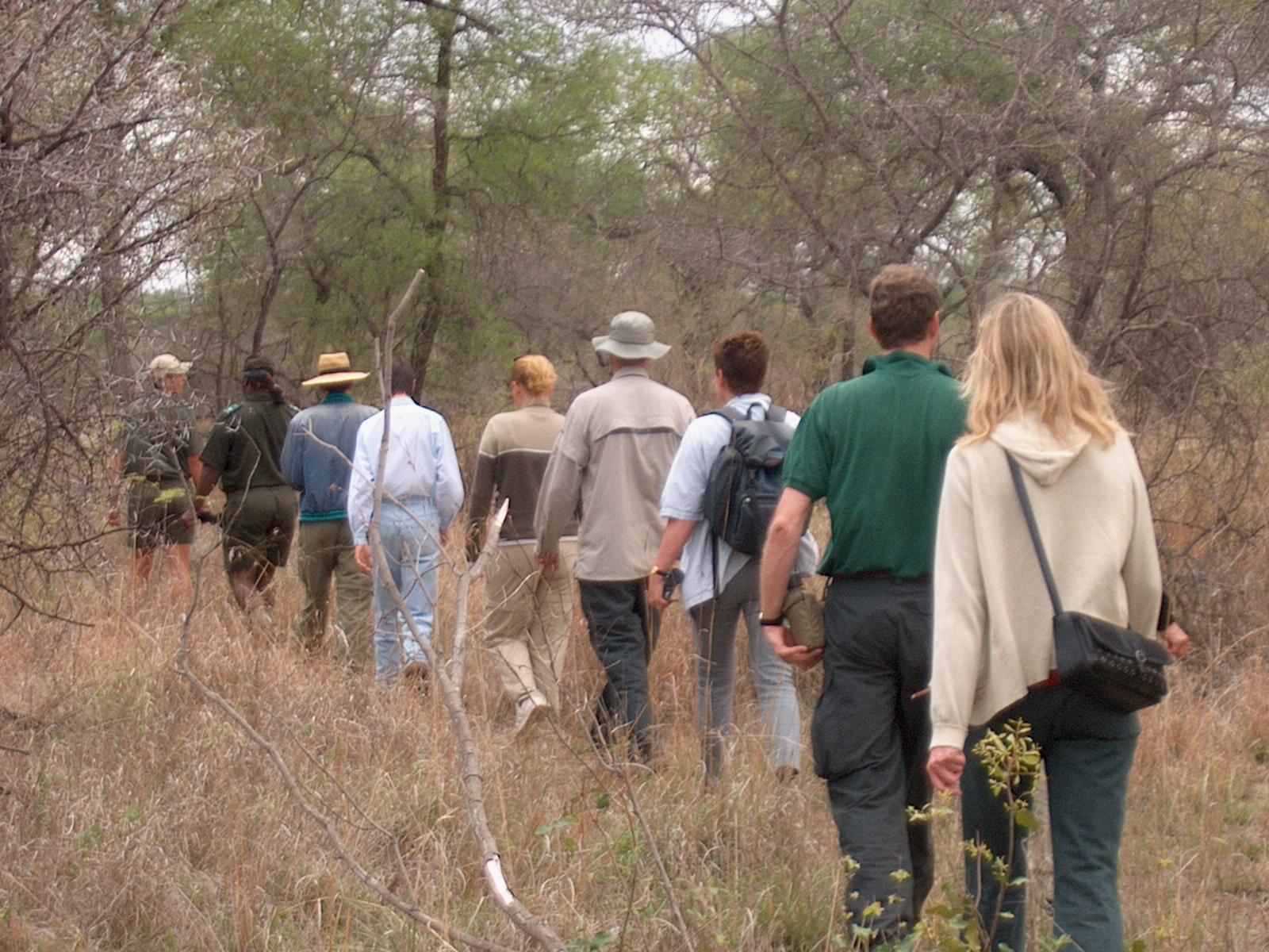 safari southafrica